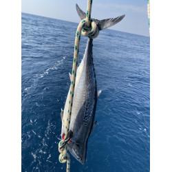 הפלגת דייג פתיונות