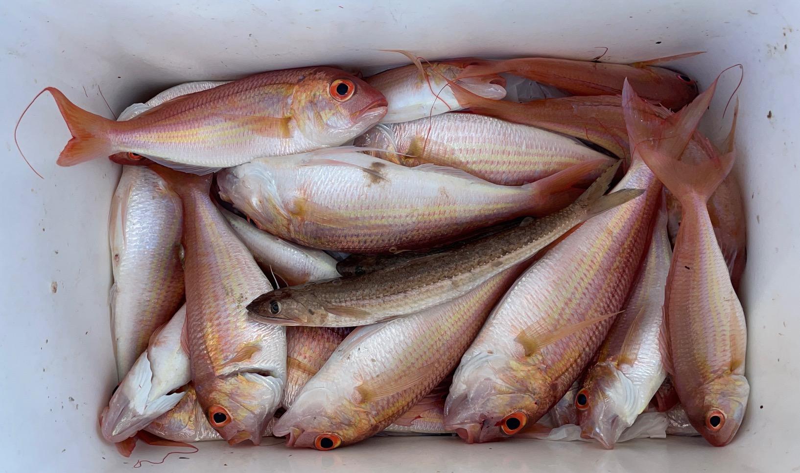 דייג בולוס